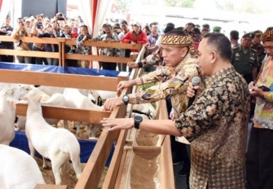 Kontes Ternak, Upaya Jabar Tingkatkan Kualitas Bibit Ternak & Produk Peternakan